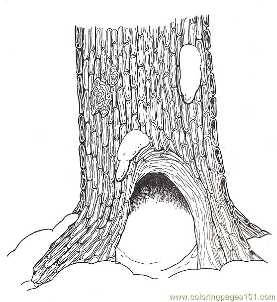 Hollow Tree Base Coloring Page Coloring Page