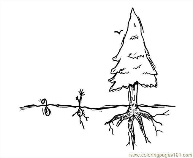 Jfk Tree 700w Coloring Page