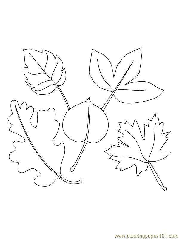 Fig Tree Coloring Pages