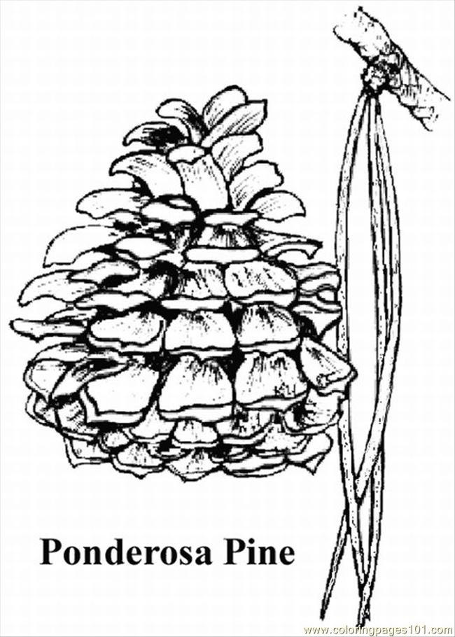 Pine Tree Coloring Pages Lrg Coloring Page