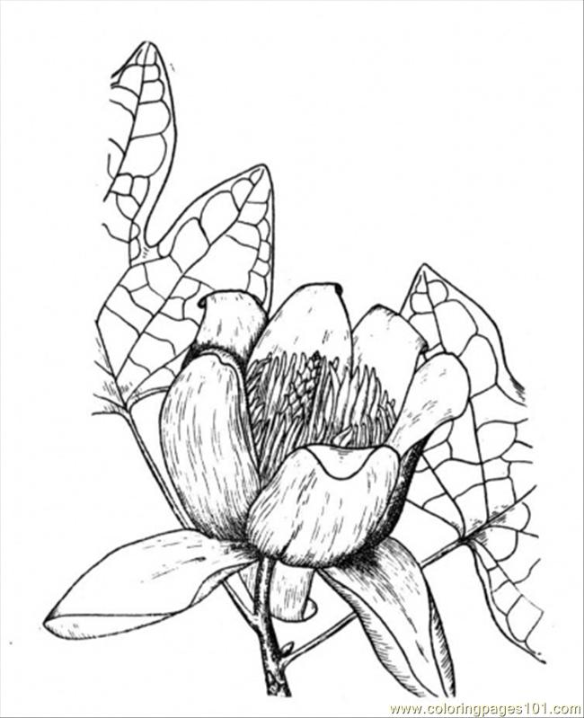 Poplar 10 Coloring Page