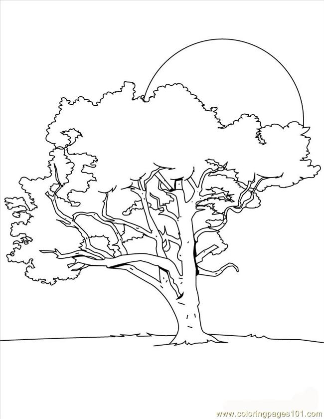 Tree Coloring Page Source 8dk Coloring Page