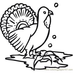 Turkey (17) Free Coloring Page for Kids