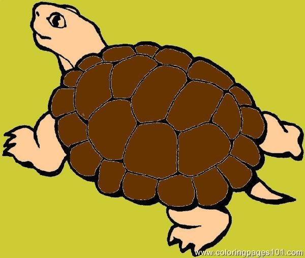 Turtle12sept Op Coloring Page