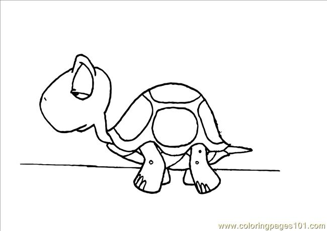 Es Pages Photo Turtle Dl Coloring Page