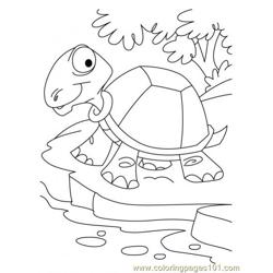 Tortoise Coloring Page5