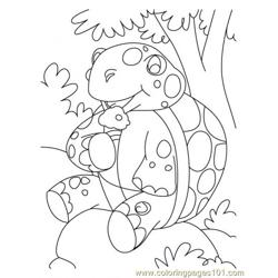 Tortoise Coloring Page7