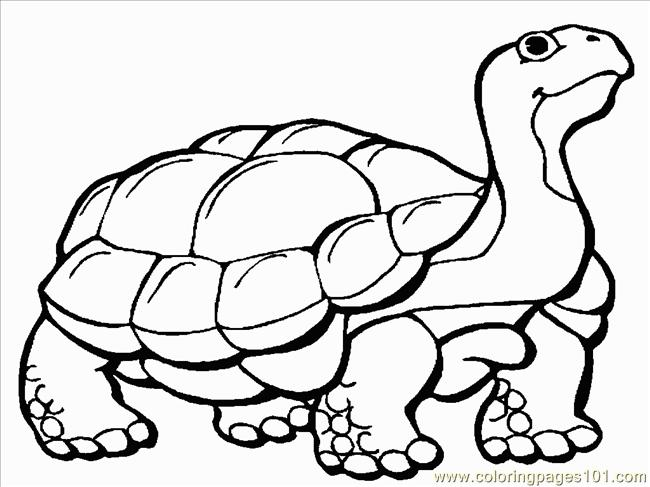 Tortoise 1 Coloring Page Free