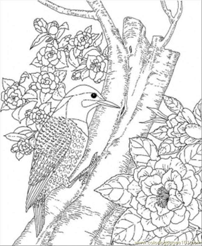 Alabama State Bird Coloring Page - Free USA Coloring Pages ...