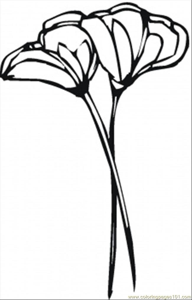 Flowers Of California Coloring Page