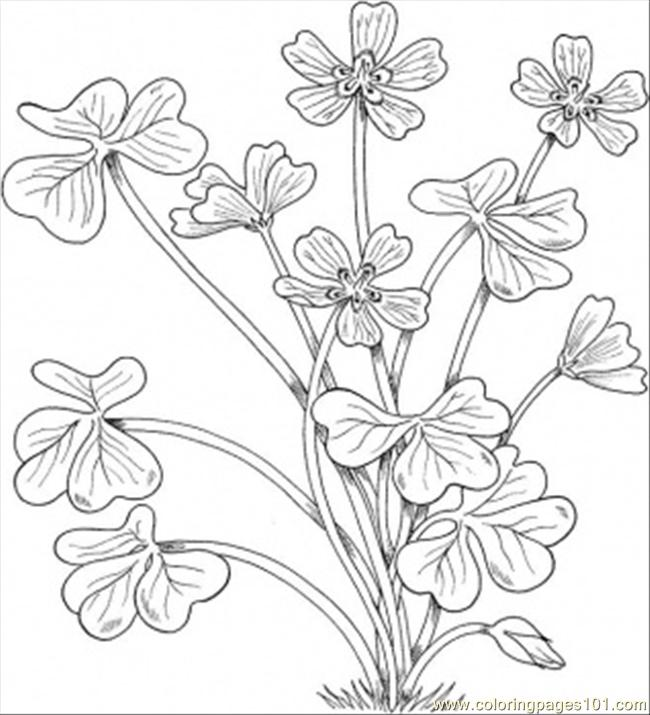 Montana Flowers Coloring Page