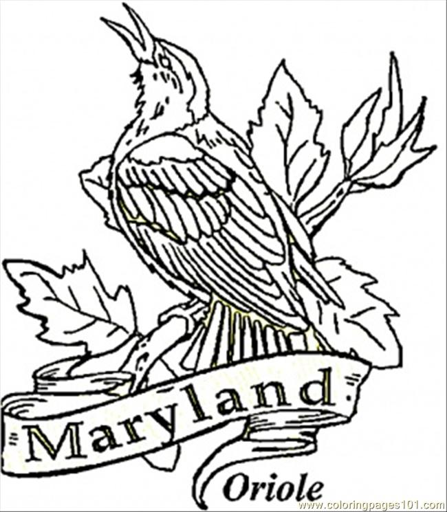 Oriole Of Maryland Coloring Page