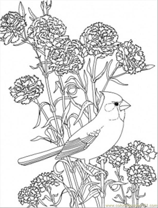 Red Carnation And Cardinal Of Ohio Coloring Page Free Usa Coloring