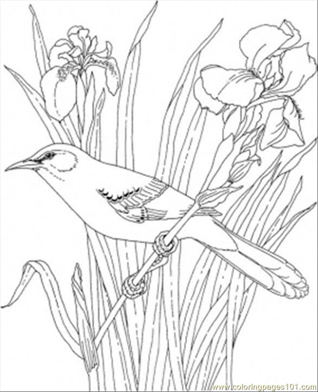 Tennesse State Bird Coloring Page