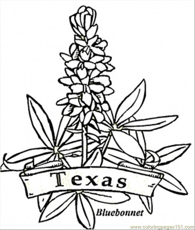 Texas Flowers Coloring Page Free