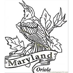 Oriole Of Maryland