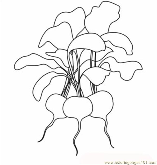 radishes t coloring page