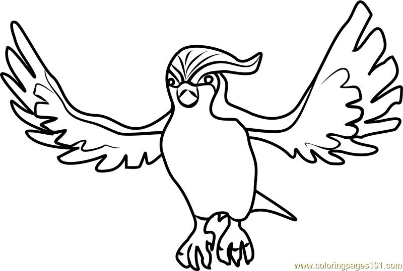 pidgeot pokemon coloring pages - photo#14