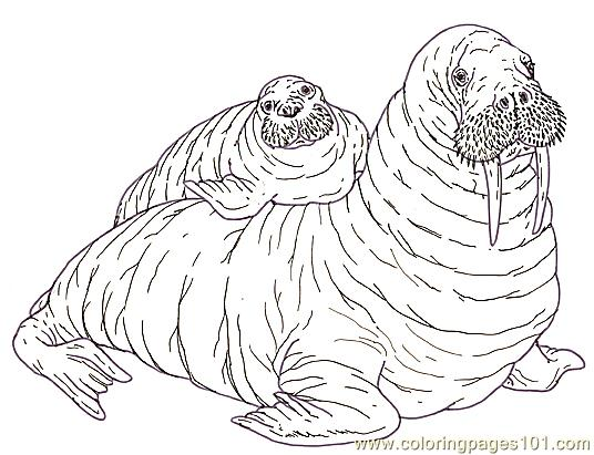 Mural tsb walrus mother and pup reverse coloring page