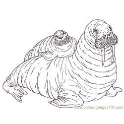 Mural Tsb Walrus Mother And Pup Reverse Free Coloring Page for Kids
