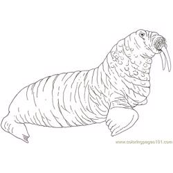Mural Tsb Walrus Reverse Free Coloring Page for Kids