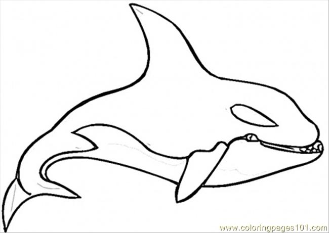 Killer Whale Coloring Page Coloring Page