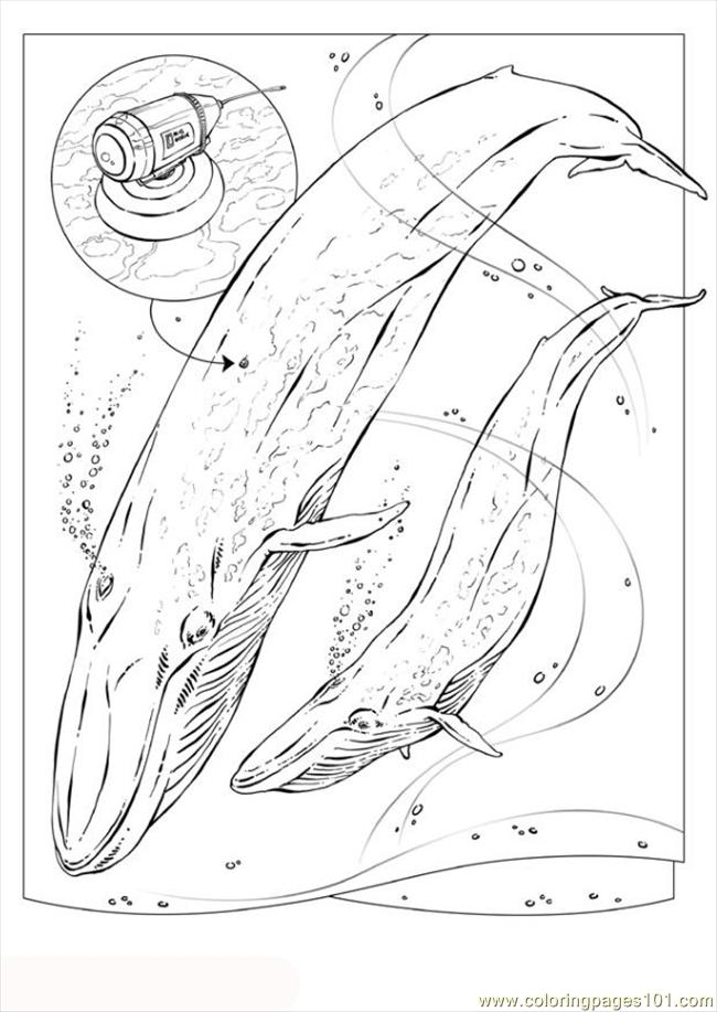 Pages Photo Blue Whale Dl5734 Coloring Page
