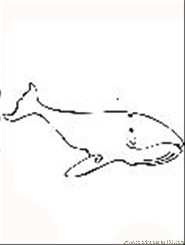 Th Humpback Whale Coloring Page
