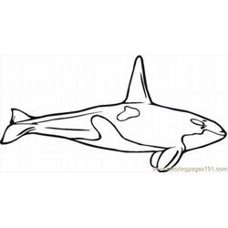 N Whale Coloring Pages 10 Lrg