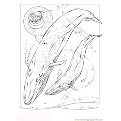 Pages Photo Blue Whale Dl5734