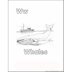 Whalecolor