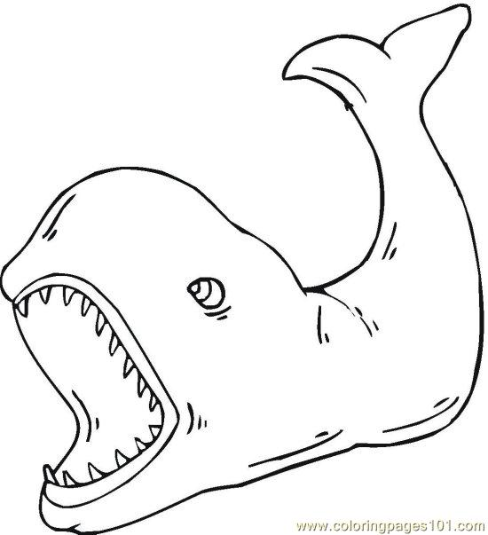 Whale Coloring Pages Pdf : Whale coloring page free pages