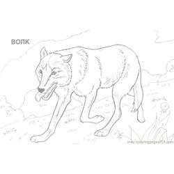 Wild animal Free Coloring Page for Kids