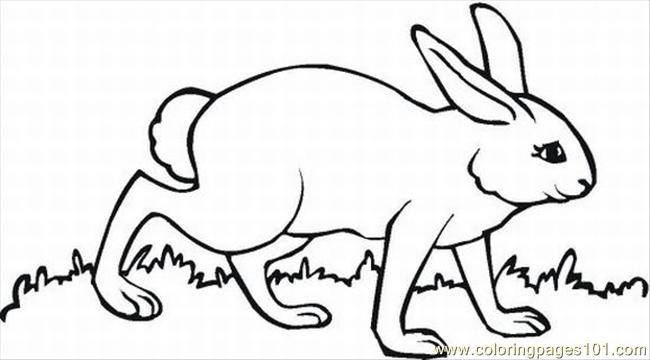 Ages Of Easter Bunnies 11 Lrg Coloring Page