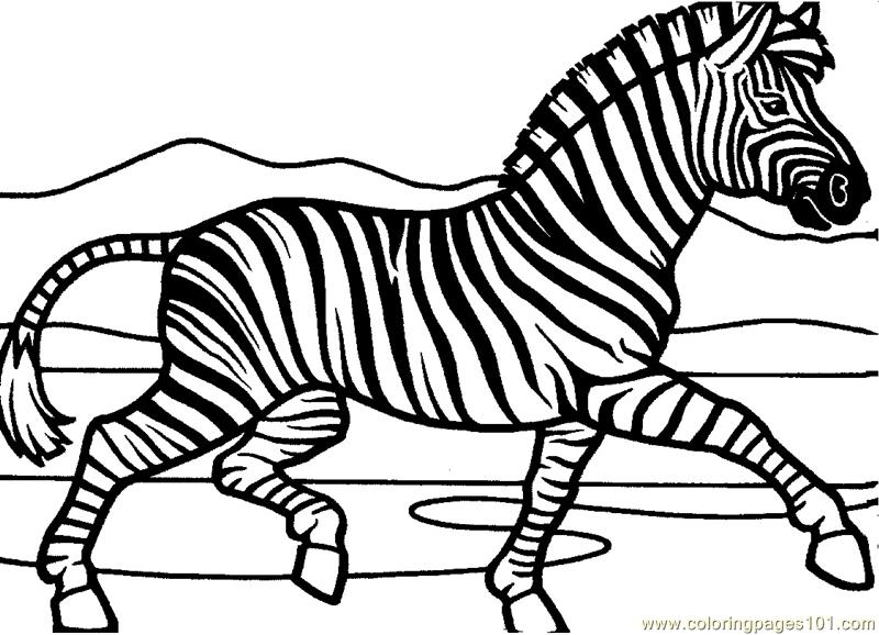 Zebra Coloring Page Free Zebra Coloring Pages ColoringPages101com