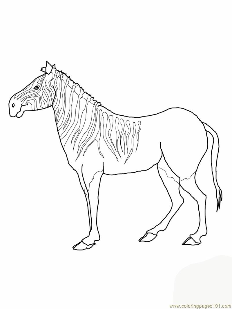 Quagga Zebra Printable Coloring Page For Kids And Adults