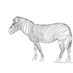 Zebra Free Coloring Page for Kids