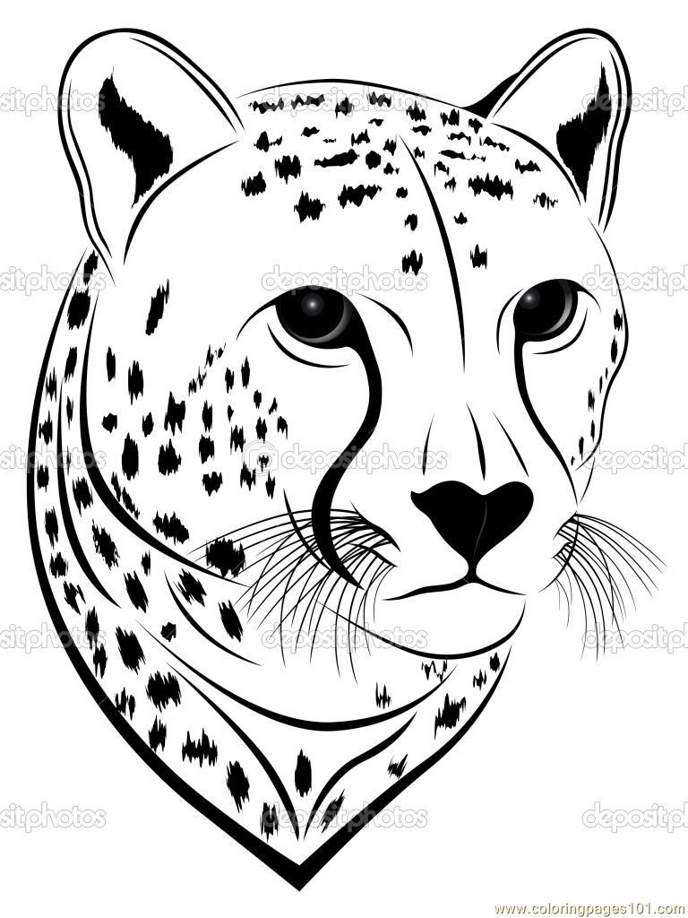 Cheetah face coloring page  Cheetah Face Coloring Page