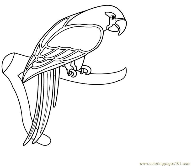 macaw coloring pages to print