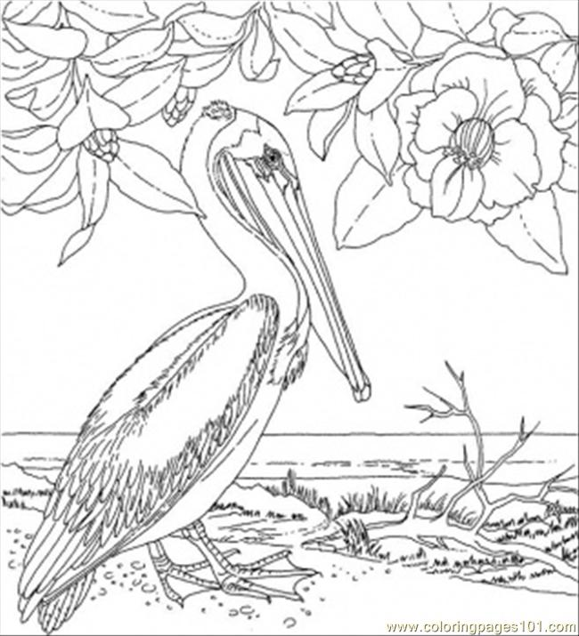 Delaware State Flower Coloring Page of Louisiana Coloring Page