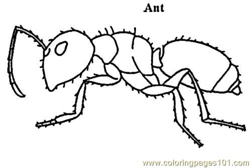Free Coloring Pages Of Ants With Food