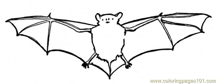 flying animal coloring pages - photo#45
