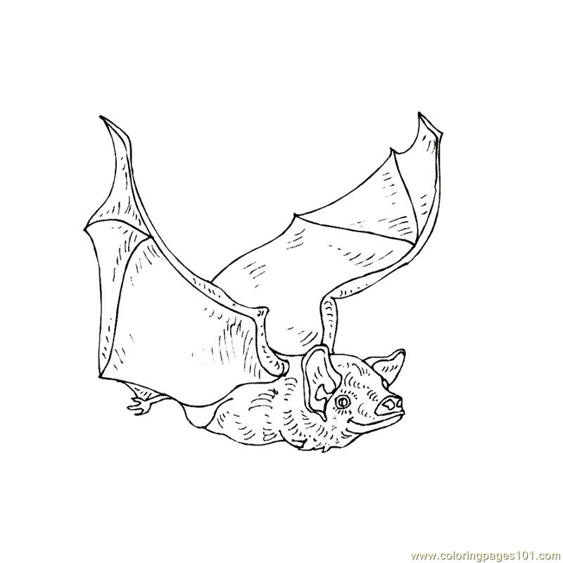 flying animal coloring pages - photo#46