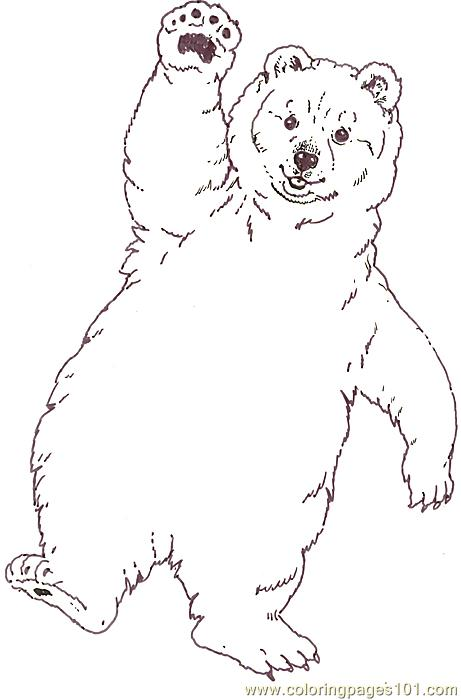 Baby Polar Bear Coloring Pages - HiColoringPages