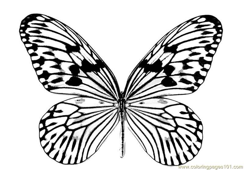 Coloring pages butterfly insects beautifull butterfly for Beautiful butterfly coloring pages