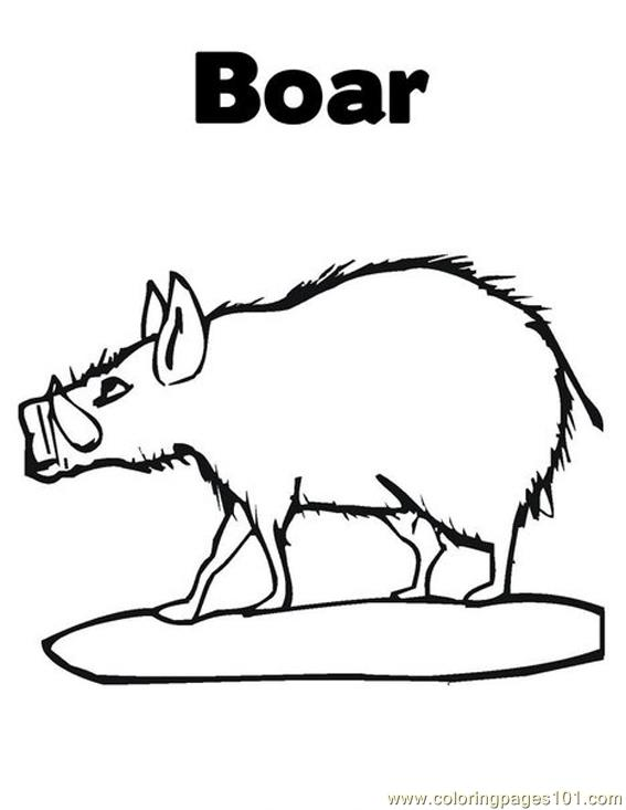 Coloring Pages Boar Mammals