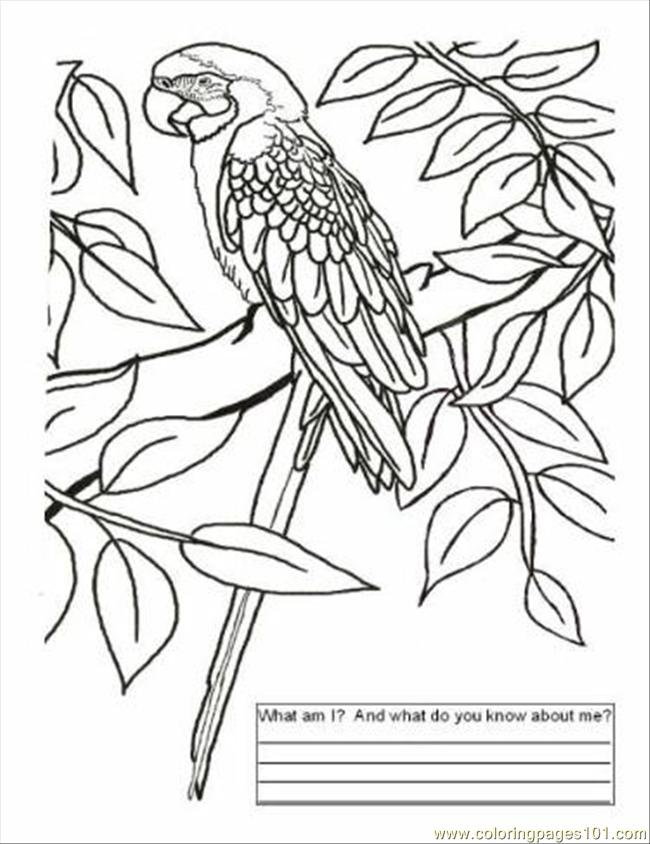Free printable coloring page brazil color page countries gt brazil
