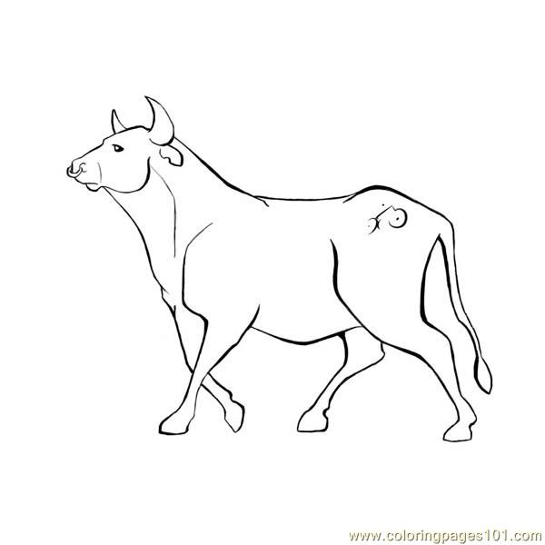 Coloring Pages Bull Mammals gt