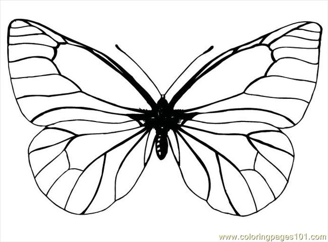 Free Printable Coloring Page Butterfly99 Insects > Butterfly title=