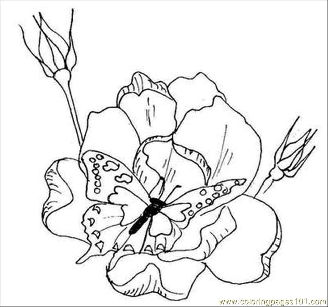 coloring pages of flowers and butterflies. Color this Page Online! free